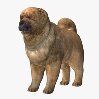 3d chow dog