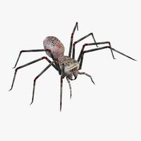 free max model spider