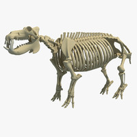 3dsmax hippopotamus river horse skeleton