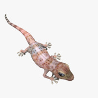 model realistic gecko animations
