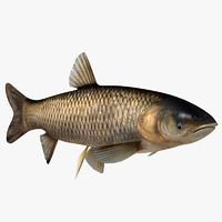3ds max grass carp