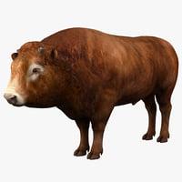 bull animal s