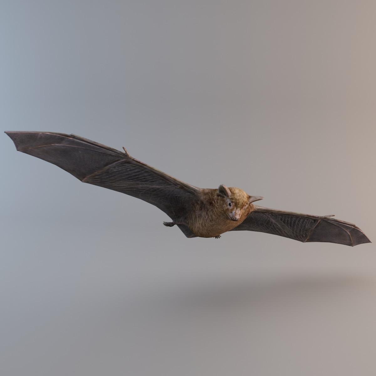 Brown_Bat_005.jpg
