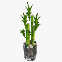 lucky bamboo 4 3ds