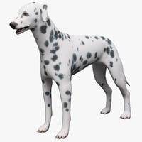 maya dalmatian dog rigged