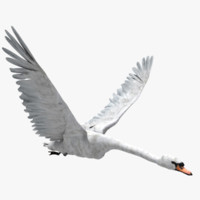 Swan (ANIMATED)