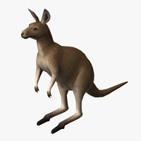 kangaroo edge loop 3d model