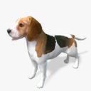 Beagle 3D models