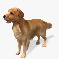 Golden Retriever 3D models