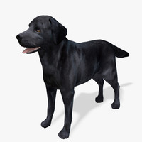 Real-Time Dog Labrador Black