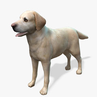 Real-Time Dog Labrador Yellow 3D Model