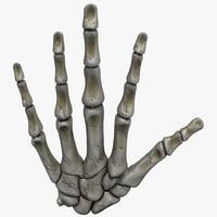 hand bones 3d model