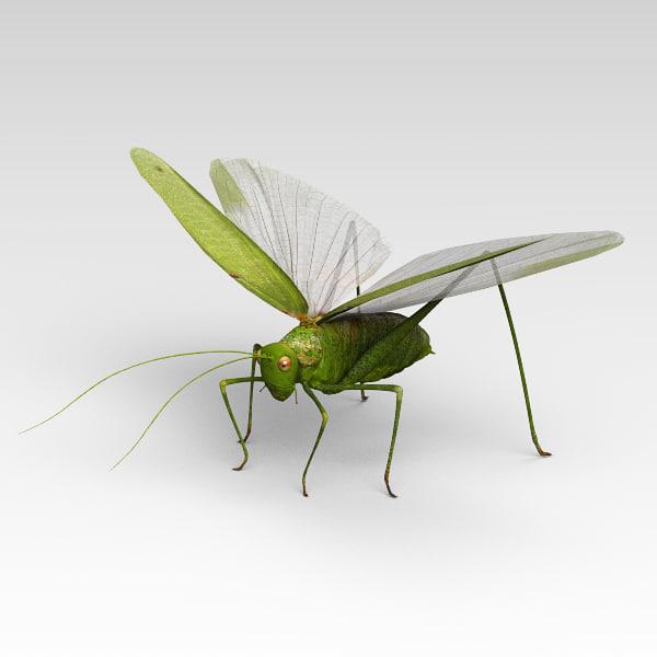 Locust_02.jpg