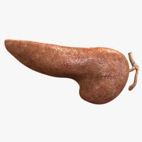 maya human pancreas