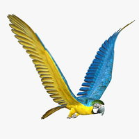 Parrot (2) (ANIMATED)