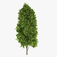 3d max cypress oak