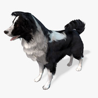 s dog border collie max