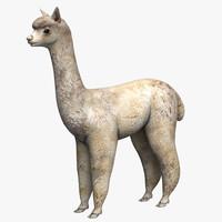 3d alpaca artiodactyl model