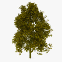 3dsmax aesculus tree