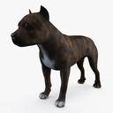 Staffordshire Bull Terrier 3D models
