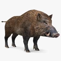 wild boar max