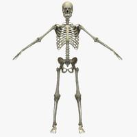 skeletal 3d model
