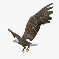 Animated Flying Eagle