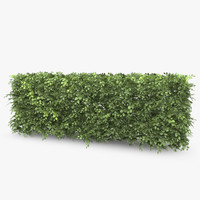beech hedge 3d 3ds