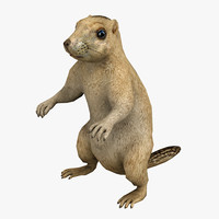 3d model rigged marmot