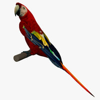 3d scarlet macaw rigged bird