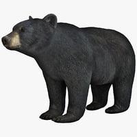 black bear max