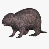 Beaver American