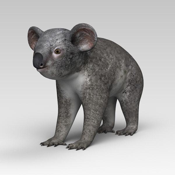 Koala_02.jpg