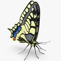 3d model butterfly papilio machaon rigged