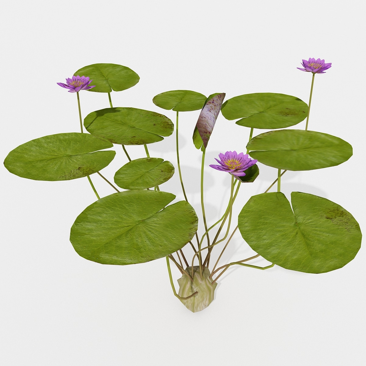 146305_Water_Lily_2_001.jpg