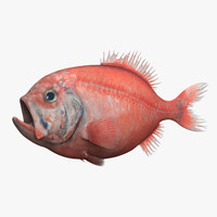 3d model of orange roughy