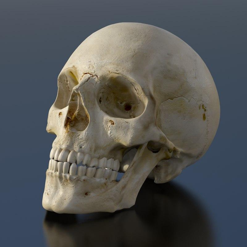 skull_0000.png