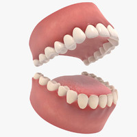 3d model human teeth mouth