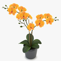 orchid yellow 3d model