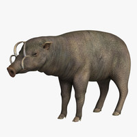 3d pig animals mammal model