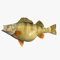 fish perch 3d model