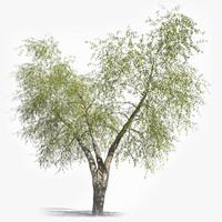maya realistic ash tree