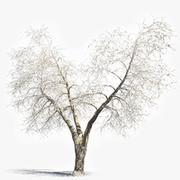 Winter Tree (6)