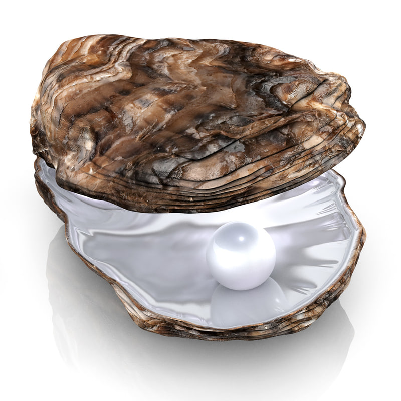 modeled oyster pearl 3d 3ds