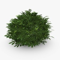 common laurel 3d model