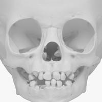 model child skull