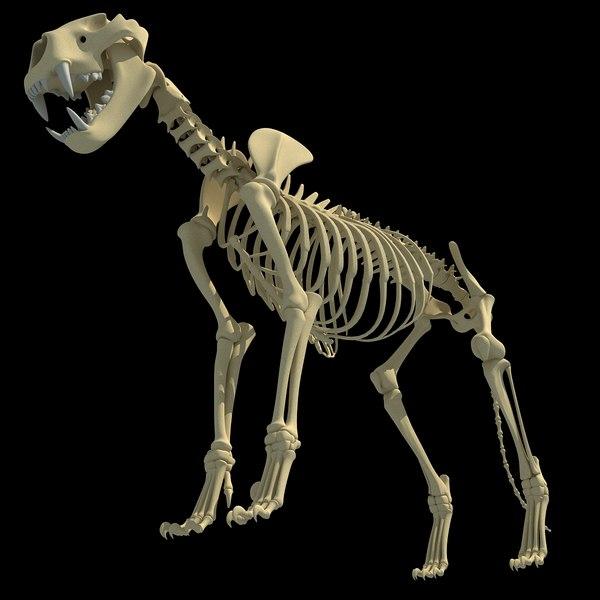 3d lion skeleton Lion Skeleton by Gandoza