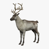 reindeer 3d 3ds