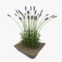 model of lavender bush