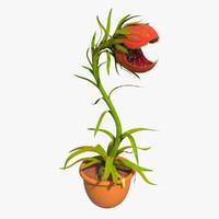 max carnivorous plant